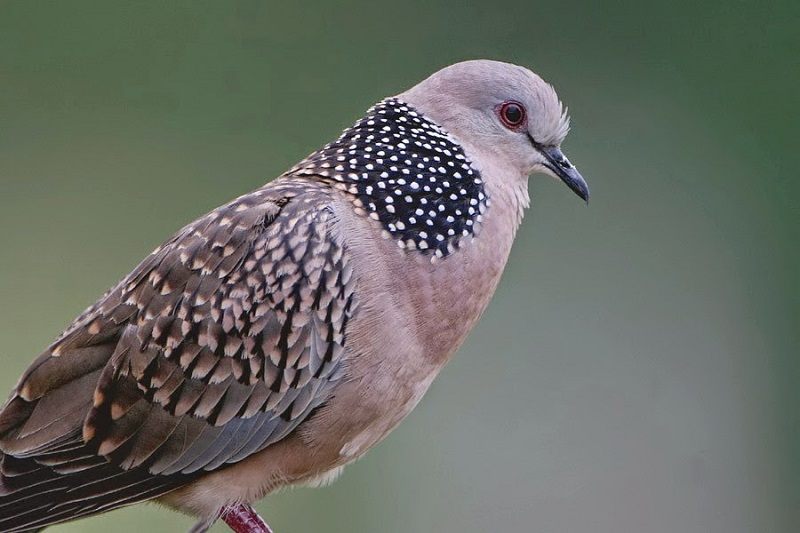 các loại chim cảnh đẹp