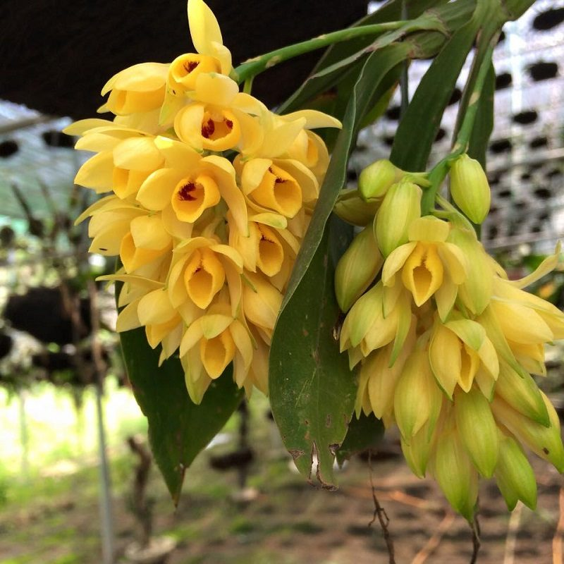 hoa lan rừng đẹp nhất