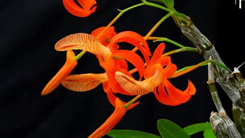 hoa lan đẹp nhất