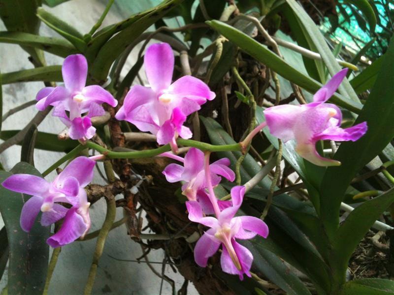 hoa phong lan dep nhat