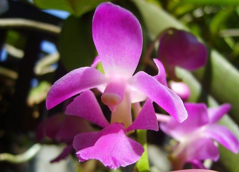 hoa phong lan đẹp nhất
