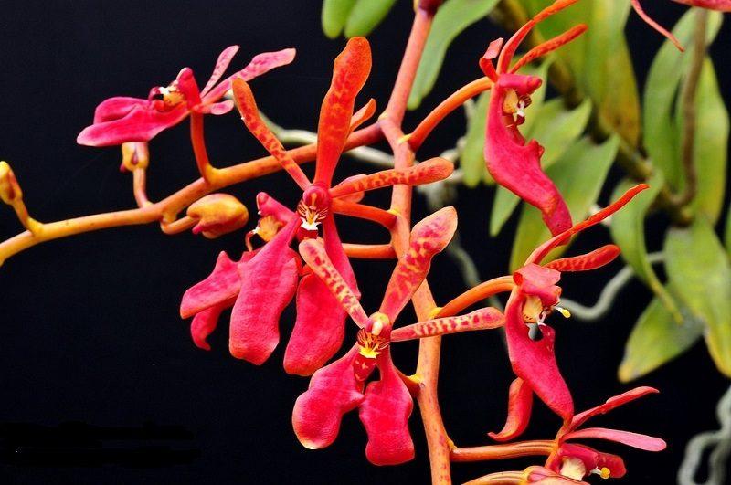 các loại hoa lan đẹp