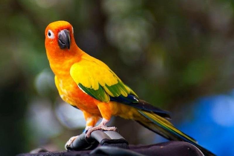 nuôi chim cảnh