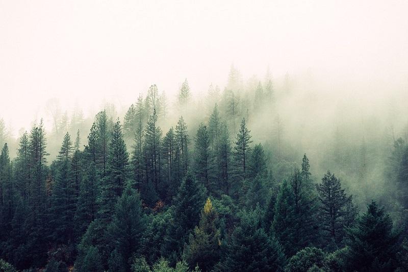 tại sao nói rừng cây như một lá phổi xanh của con người