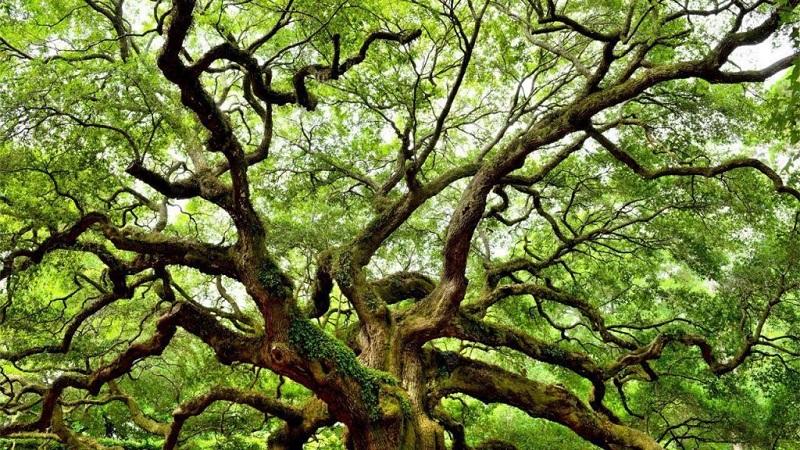 rừng cây xanh lá