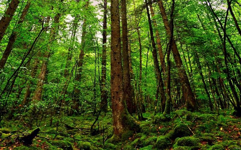 tại sao người ta lại nói rừng cây như một lá phổi xanh của con người
