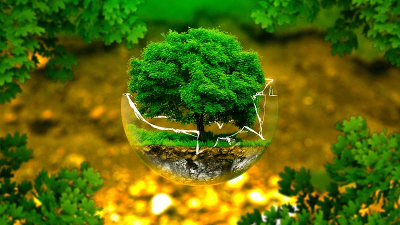 thực hành hệ sinh thái