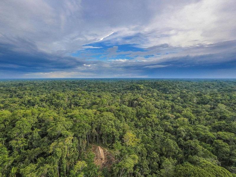 rừng amazon nam mỹ