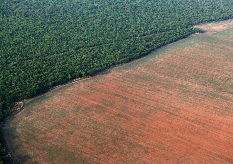 rừng rậm amazon