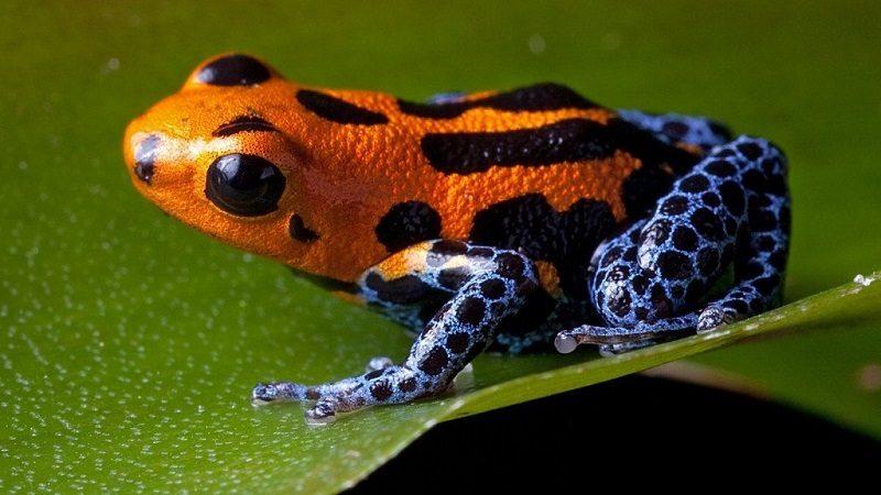 động vật rừng amazon