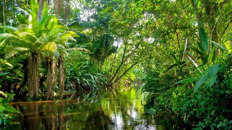 vai trò của rừng amazon