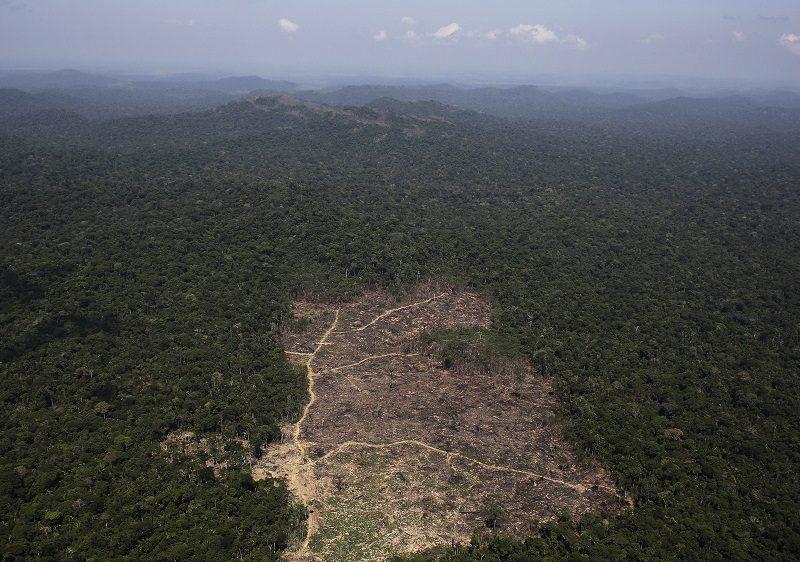 rừng amazon ở đâu