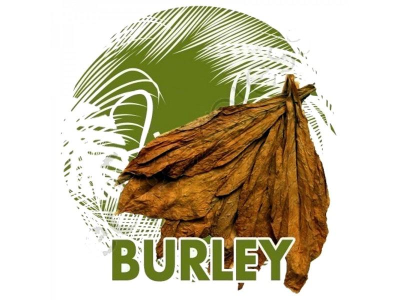 Burley Tobacco là gì