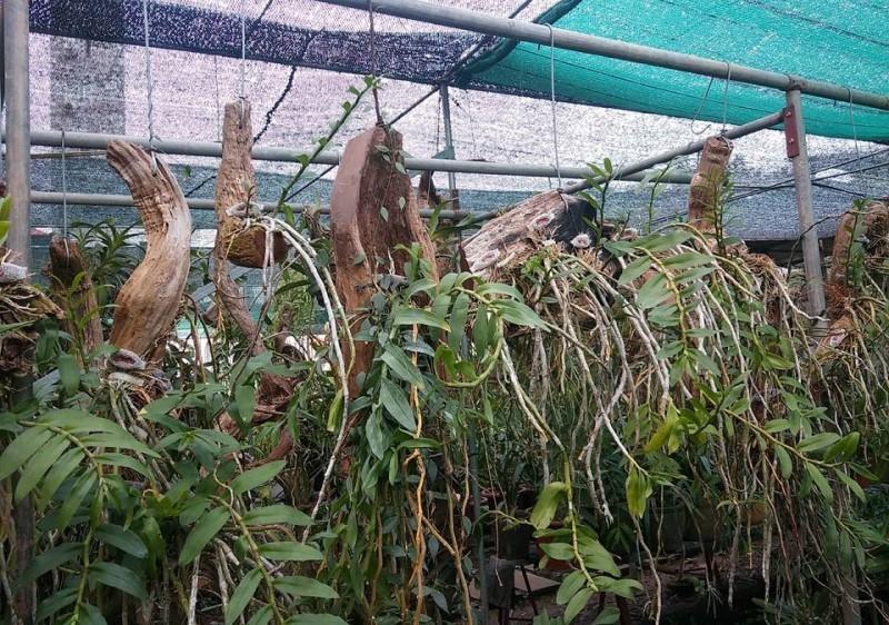 Cac Loai Go Trong Phong Lan 2
