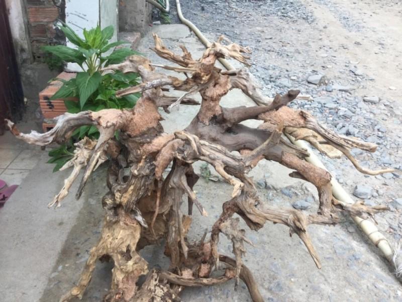 Cac Loai Go Trong Phong Lan 3