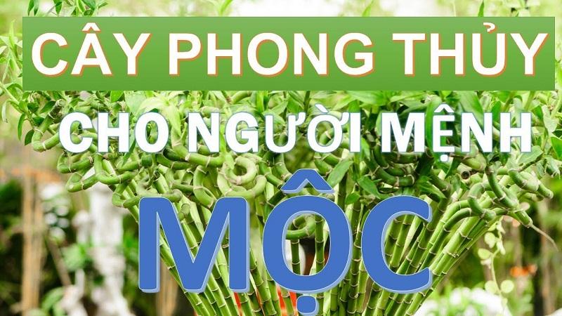 Menh Moc Hop Cay Gi