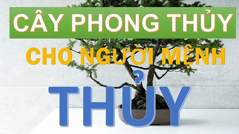 Menh Thuy Hop Cay Gi