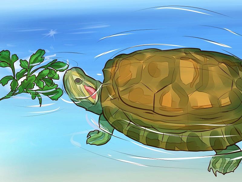rùa vàng ăn gì