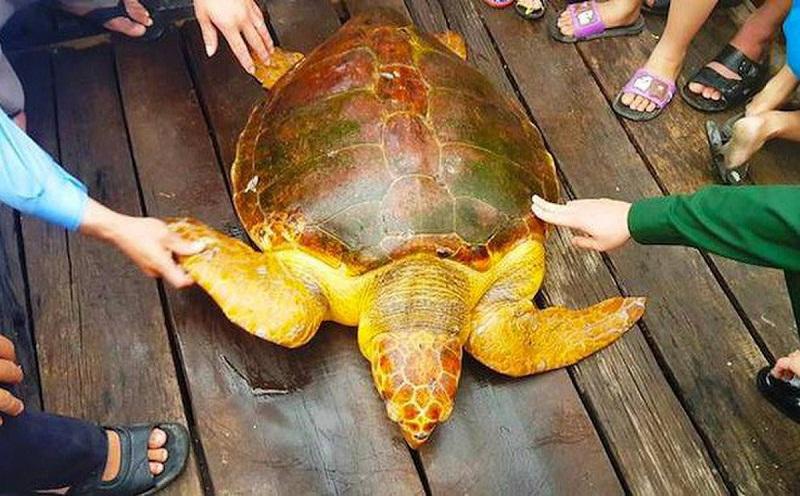 rùa vàng quý hiếm