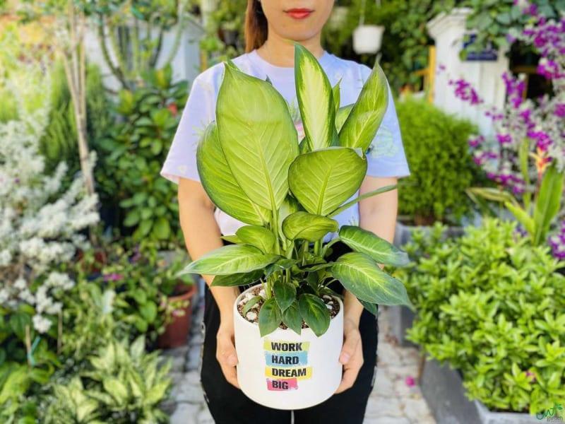 S Van Nien Thanh 800x600
