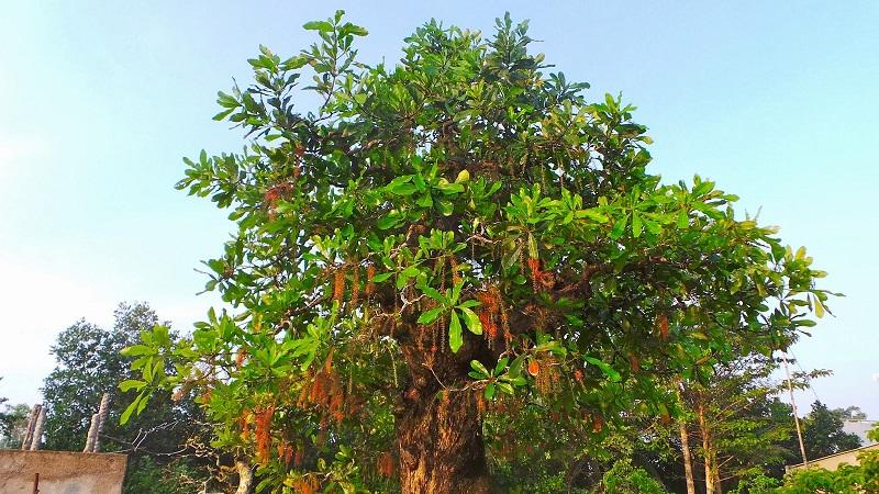 cây ưa bóng mát