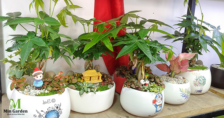 cây kim ngân và nét văn hóa á đông