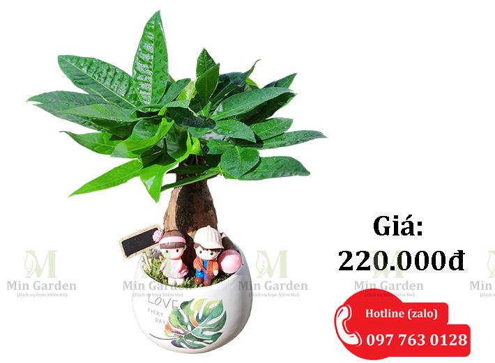 Cay Kim Ngan 220k 1