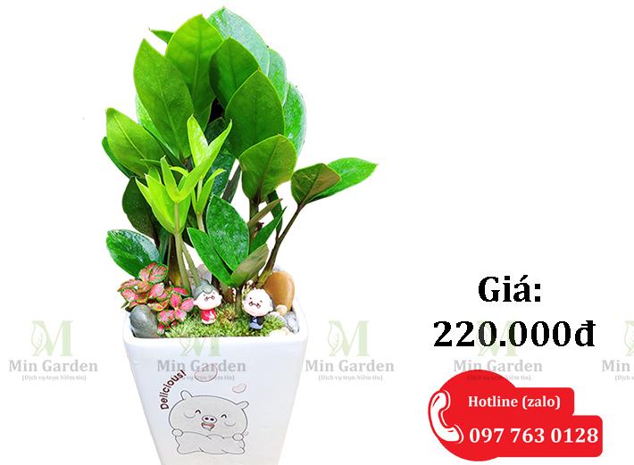 Chau Kim Tien 220k 1