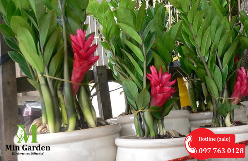 Hoa Cay Kim Tien 800x521