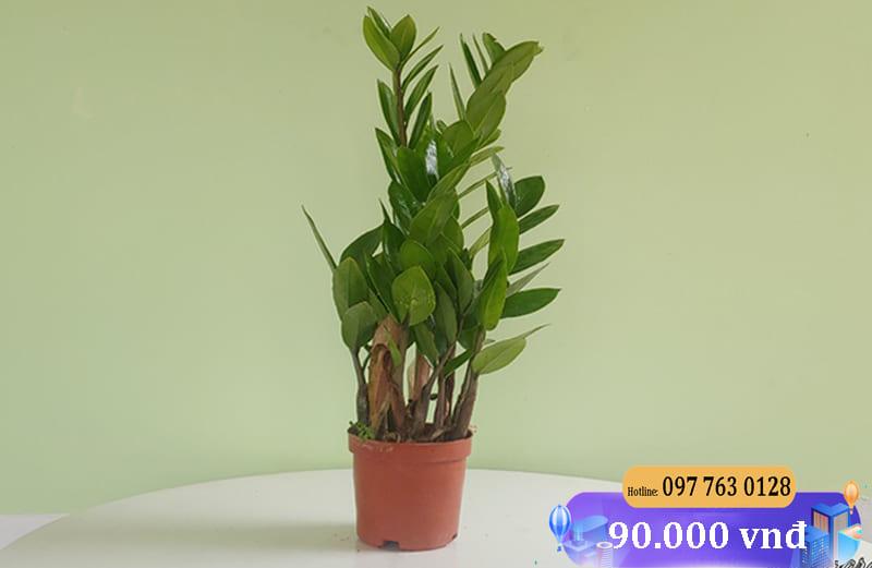 Kim Tien Tho 800x521