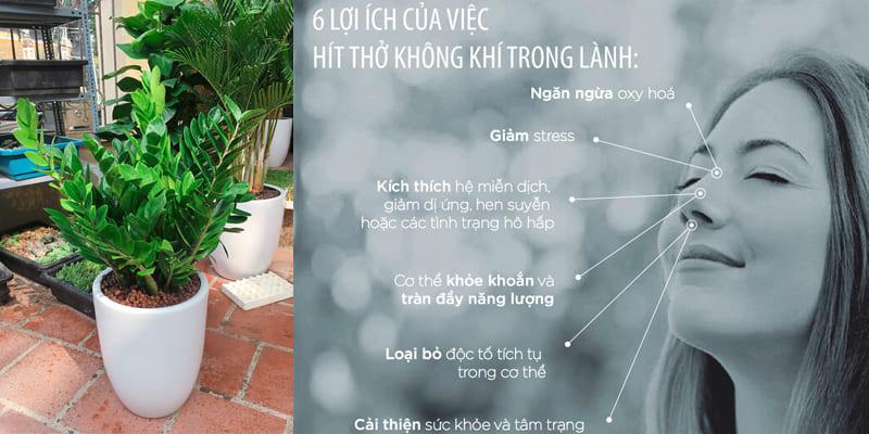 Loi Ich Cay Kim Tien 800x400