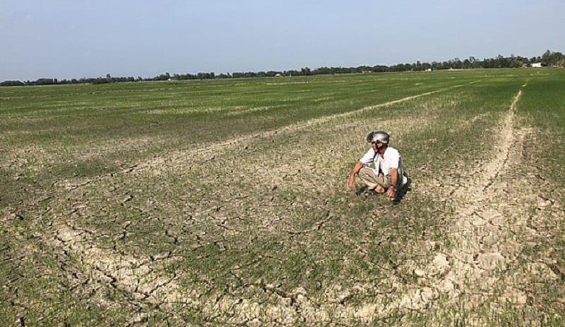 Xâm nhập mặn khiến đất bị thoái hóa, khô cằn, sa mạc hóa