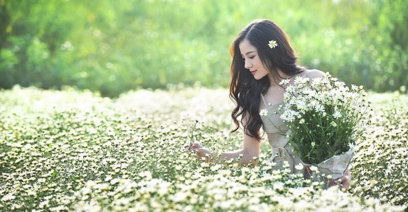 Hoa Cúc Họa Mi 5 1 800x417