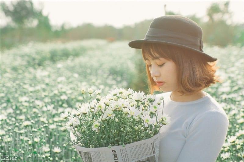 Hoa Cúc Họa Mi 6 800x532