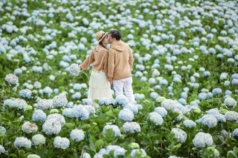 cặp đôi nam nữ mặc áo đôi hôn nhau giữa cánh đồng hoa cẩm tú cầu nở rộ