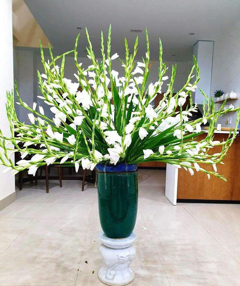 Hoa Lay ơn 12 800x955