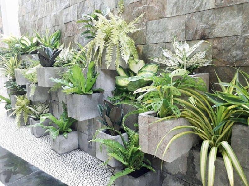 Những loại cây cảnh mini phổ biến được trồng trong chậu đá