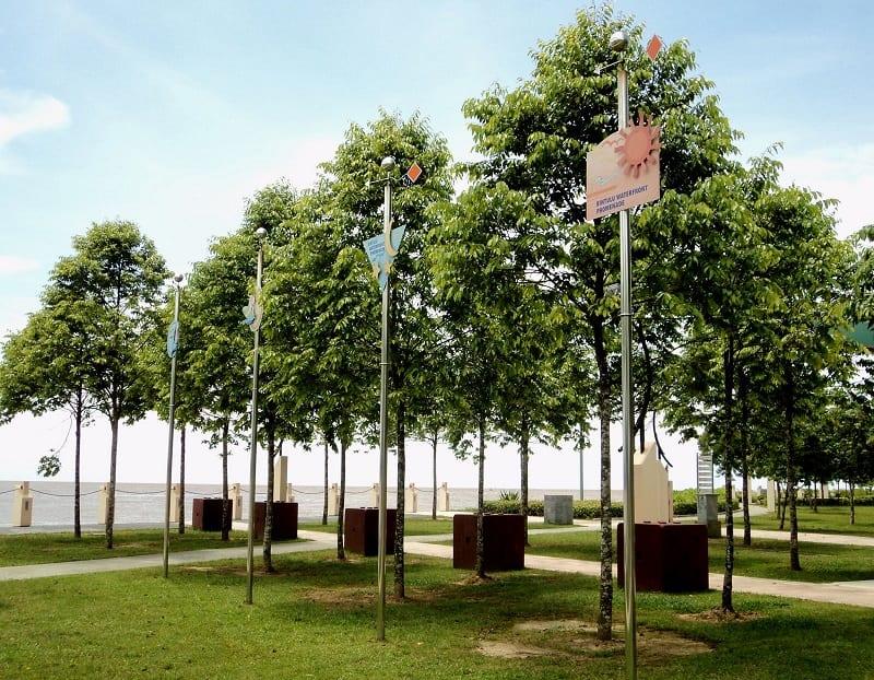 những hàng cây sao đen cao, xanh tốt được trồng trong công viên