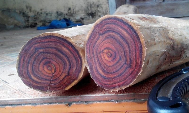 Gỗ sưa đỏ với thớ gỗ mịn, màu đỏ đặc trưng