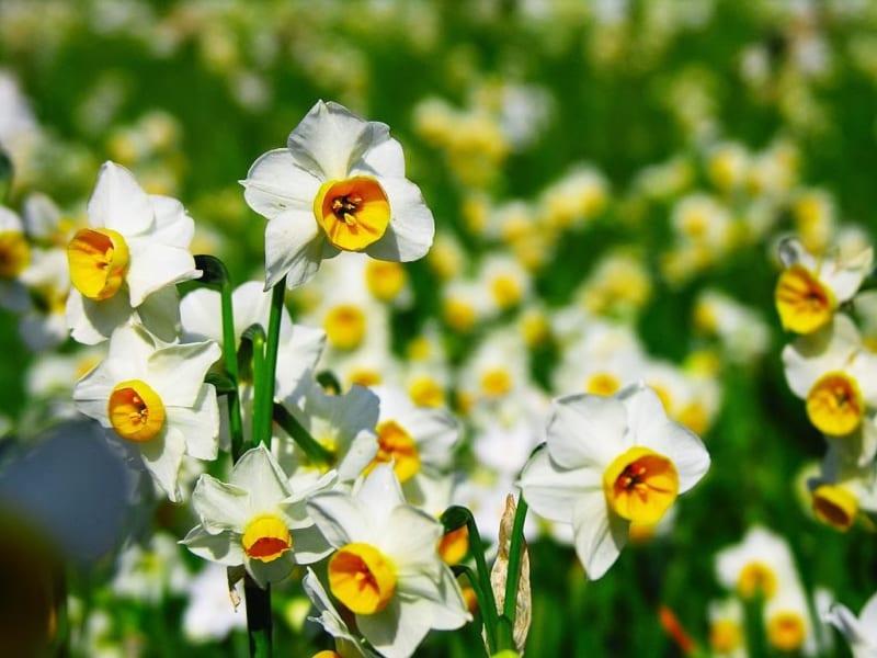 Hoa Thuy Tien 12 800x600