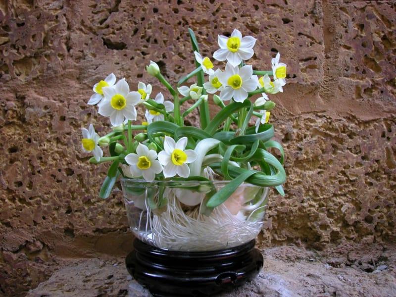Hoa Thuy Tien 5 800x600