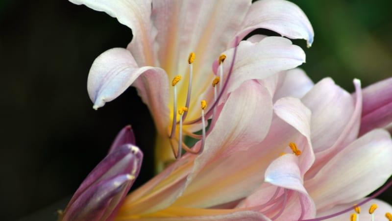 Hoa Thuy Tien 8 800x451