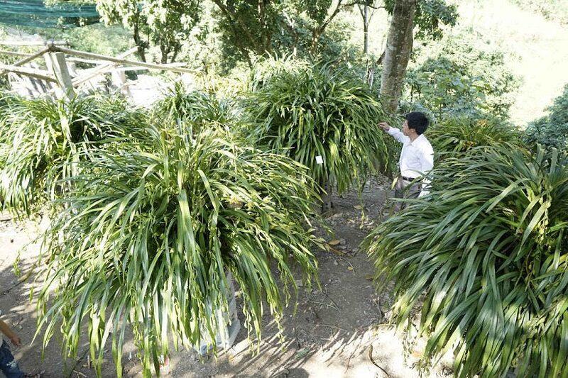 vườn lan trần mộng với rất nhiều cây xanh tốt được trồng dưới tán những cây lớn
