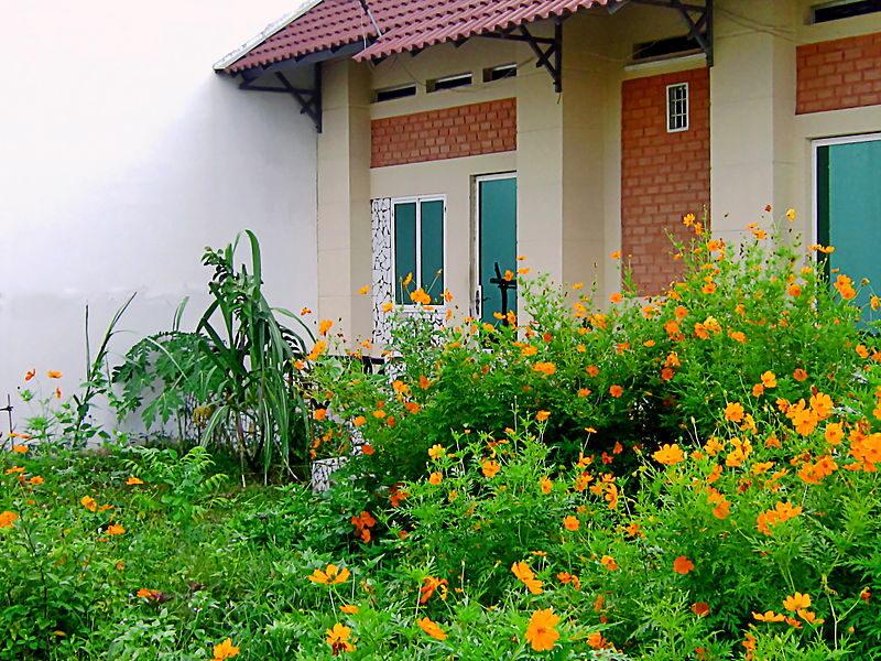 Hoa Canh Buom 10 800x600