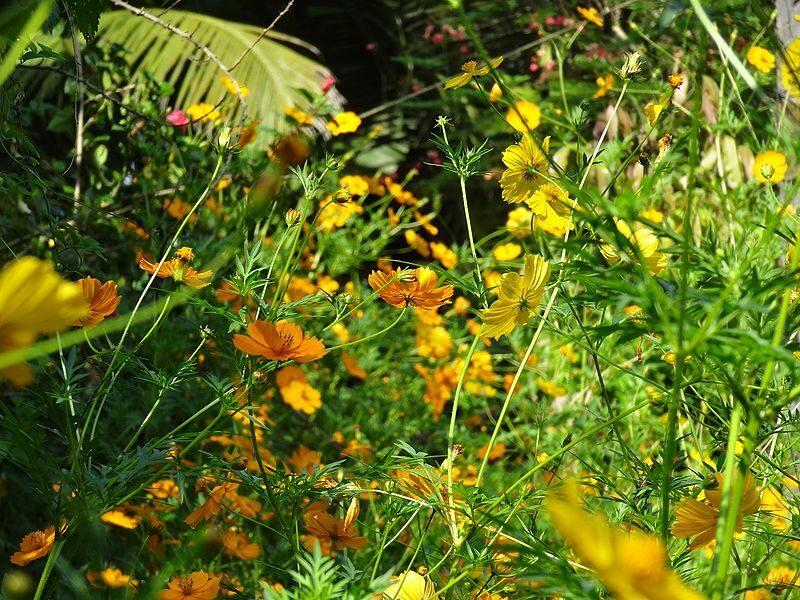 Hoa Canh Buom 4 800x600