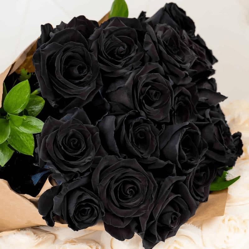 hoa hồng đen có thật không? Ý nghĩa, sự tích và cách trồng a-z - khbvptr