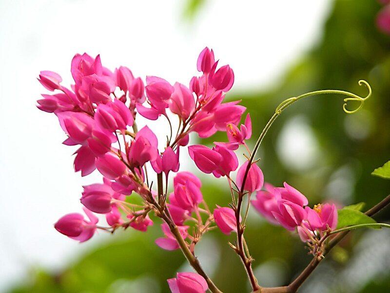 Hoa Dep Hoa Tigon 800x600