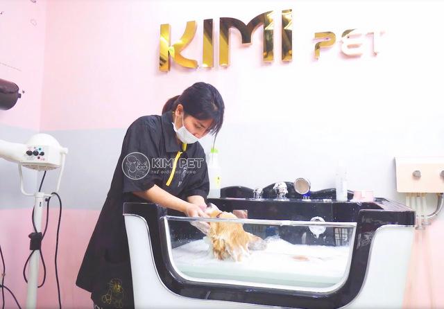 Dich Vu Cat Tia Long Cho Meo Tai Kimi Pet