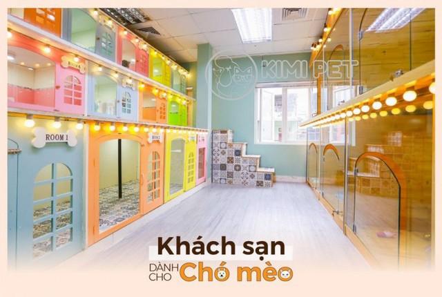Dich Vu Tam Cho Meo Tai Kimi Pet